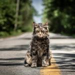 Pet Sematary: il trailer italiano della pellicola tratta dal romanzo di Stephen King